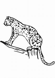 ausmalbilder gepard 9 ausmalbilder tiere