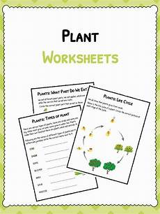 worksheets on plants cycle 13606 plant worksheets plant cycle worksheet kidskonnect