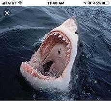 Gambar Ikan Hiu Megalodon Terbesar Di Dunia