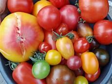 ist tomate eine frucht die tomate eine allgemeine einf 252 hrung