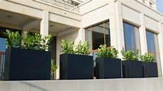 Sichtschutz Terrasse Pflanzkübel - sichtschutz f 252 r terrassen 5 stilvolle m 246 glichkeiten