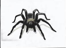 Draw A Realistic 3d Spider By Elyarr