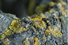 algen auf pflastersteinen entfernen flechten an b 228 umen 187 schaden sie den geh 246 lzen