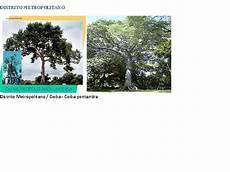 simbolos naturales del distrito capital simbolos patrios naturales los simbolos patrios naturales