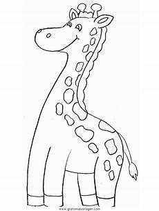giraffen 14 gratis malvorlage in giraffen tiere ausmalen