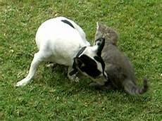 chat et chien ou chien et chaton jeux marrants