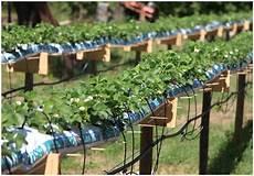 hochbeet bepflanzen kräuter erdbeeren im rohr erdbeeren in rohr erdbeeren im