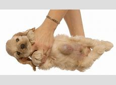 Hernias In Dogs: Types, Symptoms, And Treatments   Dogtime