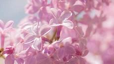flower theme for windows 10 8 7