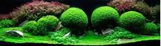 10 Gambar Hiasan Akuarium Yang Cantik Seperti Taman