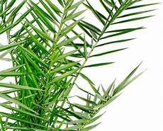 aloe humilis giftig canariensis verzorging 123kamerplanten