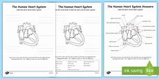 the human heart cardiovascular system labelling worksheet