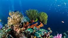 dive cozumel cozumel scuba diving archives