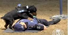 simuler un malaise quand un chien r 233 alise quot un cardiaque quot sur un policier