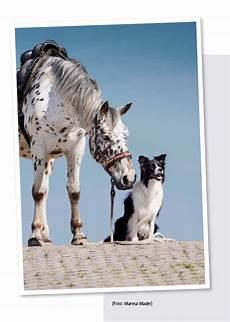 Malvorlage Pferd Und Hund Blick Ins Buch Praktische Ausbildung F 252 R Pferd Und Hund