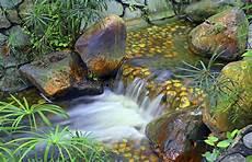kleiner wasserfall im garten kleiner tropischer wasserfall im garten stockbild bild moos tropisch 54206489