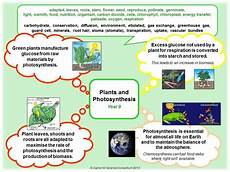 ks3 plants photosynthesis worksheets 13619 ks3 science packs science pathways