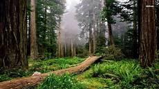 Kumpulan Berbagai Gambar Hutan Yang Asri