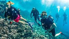 scuba diving with sharks youtube