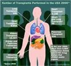Gambar Organ Dalam Tubuh Manusia Terbaru Contoh Artikel