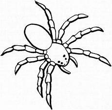 Window Color Malvorlagen Spinne Dangerous Spider Coloring Page Netart