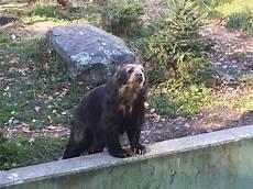 animal worksheets in 13905 ross park zoo binghamton ny top tips before you go tripadvisor