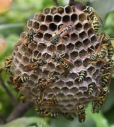 nid de guepes tarif enlever nid de gu 234 pes 01 40 38 02 56 enlever nid de