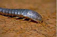 Was Sind Silberfische - how we got rid of silverfish boing boing