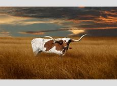 University of Texas Longhorns Wallpaper   WallpaperSafari