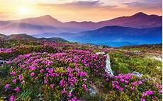 Flower Valley Wallpaper by Valley Of Flowers Trekngo
