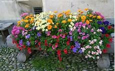 sfondo a fiori sfondi per desktop i fiori sfondo 024