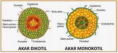 Biologi Gonzaga Monokotil Dikotil