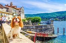 urlaub mit hund am lago maggiore informationen