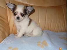 chiot a donner montpellier chiot a donner montpellier nos amis les animaux