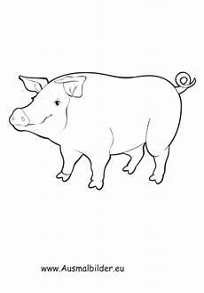 Ausmalbilder Schweine Bauernhof Ausmalbilder Dickes Schwein Schweine Malvorlagen