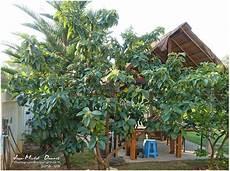 Les Fleurs Le Jardin Et La Nature Le De Khon Kaen