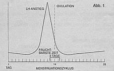 wann ist der eisprung ovulationstest schwanger werden mit lh test eisprungtest