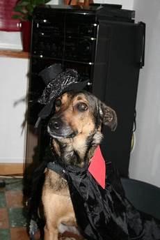 choisir chien test test de personnalit 233 choisir chien
