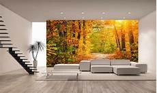 Autumn Forest Wall Mural Photo Wallpaper Wall Decor