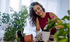 serpenti da tenere in casa piante da tenere in casa le 5 migliori