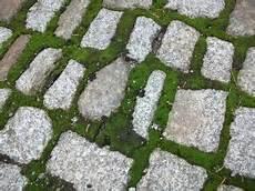 algen auf pflastersteinen entfernen moos entfernen