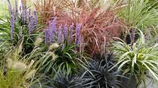 steingarten gräser winterhart winterharte gr 228 ser und stauden schneiden frag mutti