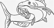 Jual Bibit Ikan Bawal Karawang gambar mewarnai ikan lele