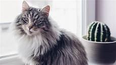 comment lutter contre une allergie aux poils de chat