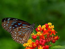 Wallpaper Butterfly Images