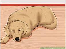 why do dogs get pneumonia