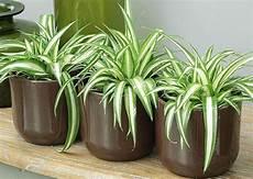 Les Plantes S Utilisent Depuis Toujours Dans La D 233 Coration