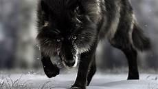 Black Wolf Wallpaper 1920x1080