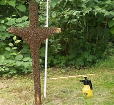 sterben bienen im winter kf dem bienensterben europas bienen in not proplanta de