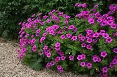 pflanzen für trockene schattige standorte uebigau gartenbau frauenfeld fotogalerie
